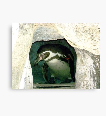 PENGUIN III Canvas Print