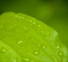 After the Rainfall 2 by Rick Ruppenthal