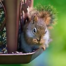 Sneaky Red Squirrel by Edward Myers