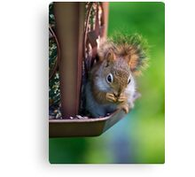 Sneaky Red Squirrel Canvas Print