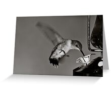 Hummingbird in Black and White Greeting Card