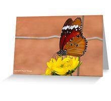 THE AFRICAN MONARCH - Danaus chrysippus aegyptius Greeting Card