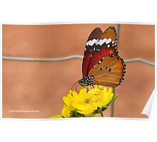 THE AFRICAN MONARCH - Danaus chrysippus aegyptius Poster