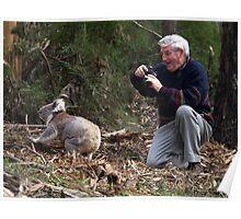 Koala encounter in the Otway Ranges, Victoria Poster