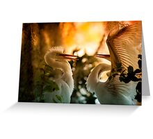 Frisky Feathered Teenagers Greeting Card