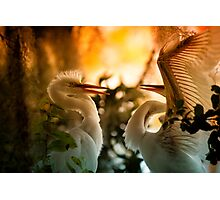 Frisky Feathered Teenagers Photographic Print