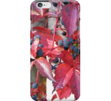 Flowers fruits red hot iPhone Case/Skin