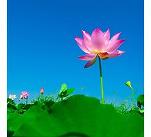 Yoga meditation lotus flower Photographic Print