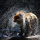 Big Splash by Lisa G. Putman