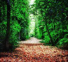 Woodland Path by Vicki Field