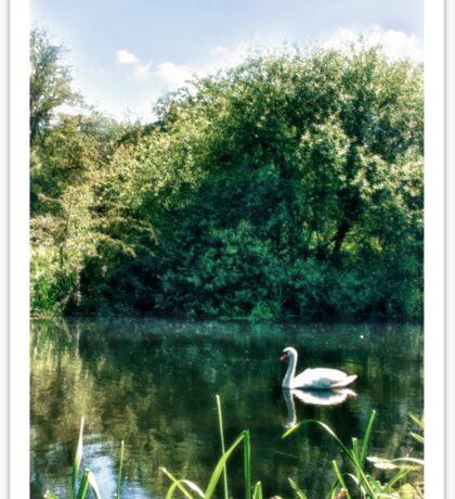 Swan River  Sticker