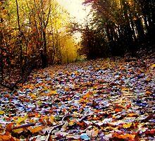 Autumn Leaf Path (HDR) by Vicki Field