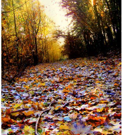 Autumn Leaf Path (HDR) Sticker