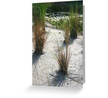 Swamp with Grasses  Greeting Card