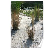 Swamp with Grasses  Poster