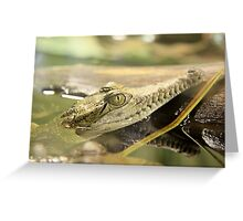 Baby Crocodile Greeting Card
