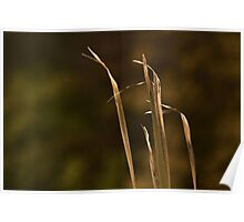 Rustic Reeds Poster