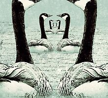 Synchronized Swimming Geese  by Jean Gregory  Evans