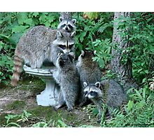 Raccoon Mom with 4 Kits Photographic Print