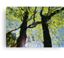 Springtime Morning With Twin Forest Trees  Canvas Print