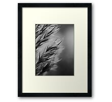 Grass no longer green Framed Print