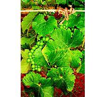 Grape Photographic Print