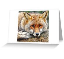 Foxy eyes Greeting Card