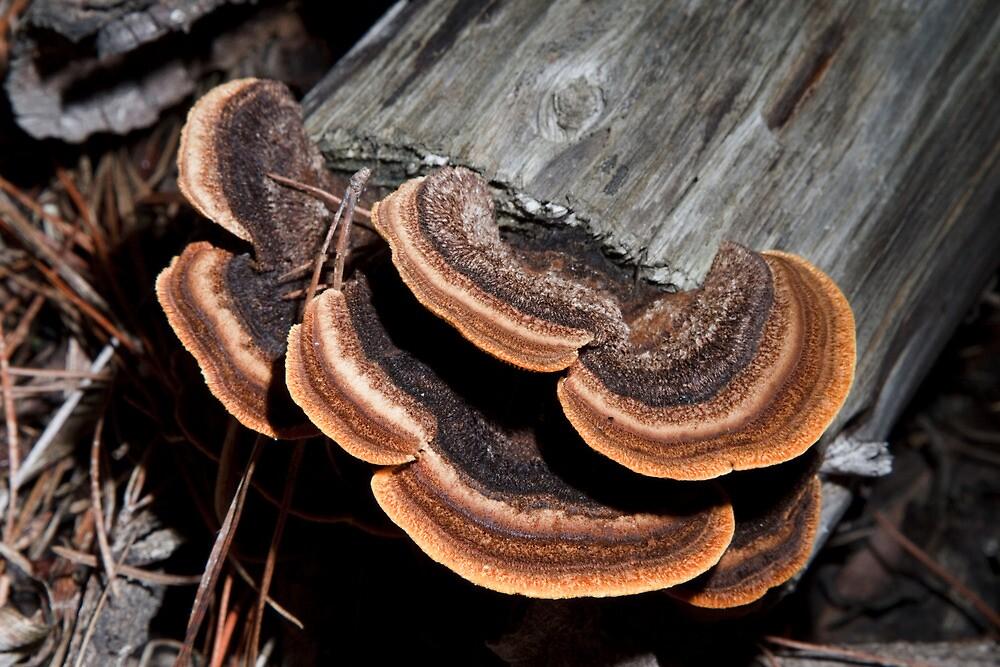 Fungi by Colin  Ewington