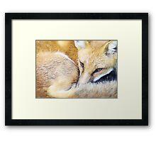 Resting Red Fox Framed Print