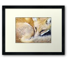 Resting Red Fox Framed Print