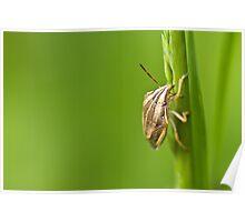 Heteroptera Poster