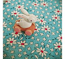 Bunny on Blue Photographic Print