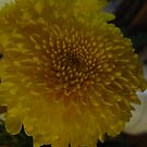 Yellow Chrysanthemum by Portia Greenwood