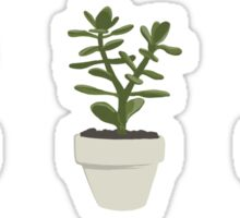Cacti & Succulents (White) Sticker