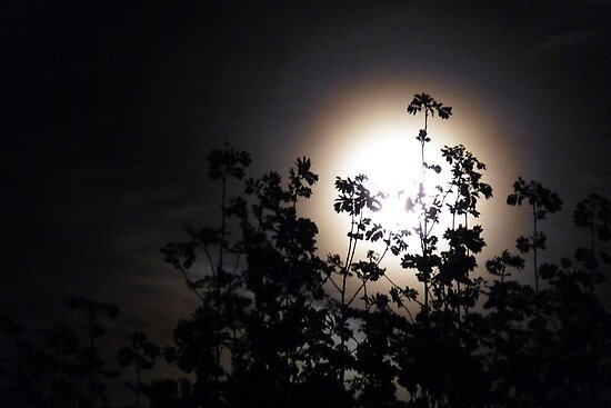 Full moon 28 April 2010 by Photos - Pauline Wherrell
