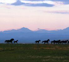 Sunrise Run  by Judy Grant