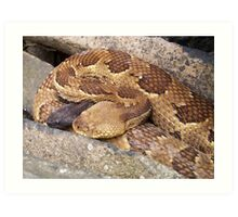 Timber Rattlesnakes Art Print