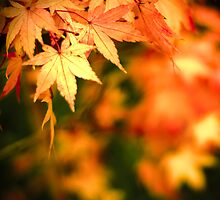 ...autumn splash... by Geoffrey Dunn