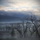 Kinglake Morning by Pam McLure