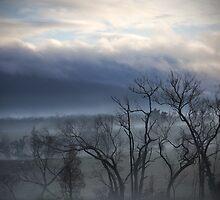 Kinglake Morning by Pam McLure