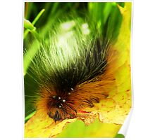 Fluffy Caterpillar Number two Poster