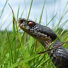 Snake In The Grass by Robbie Labanowski