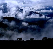 Spanish Wild Horses at Dawn, Asturias. by Ian Sanders