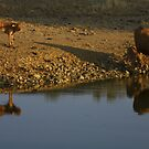 feeding at the waterpond by fototaker