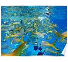 Blue sea and fishes Poster