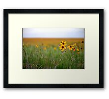 Prairie Wildflowers Framed Print
