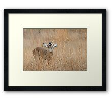 Romance in the Air Framed Print