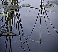water plants by Bill vander Sluys