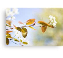 Once Upon a Time, It Was Spring... Canvas Print