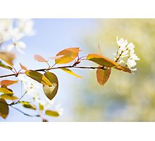 Once Upon a Time, It Was Spring... Photographic Print